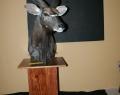 Nyala Pedestal