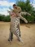 Leopard Hunts namibia